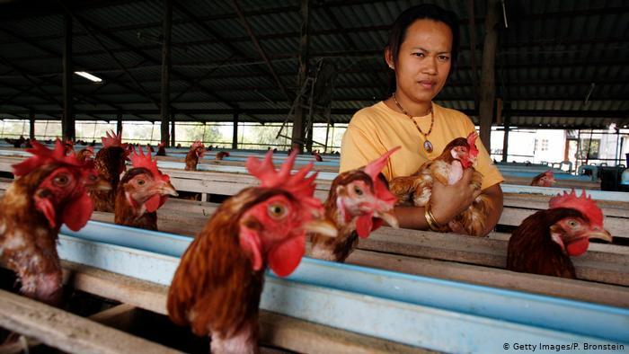 Thailand Symbolbild Hühnerfarm
