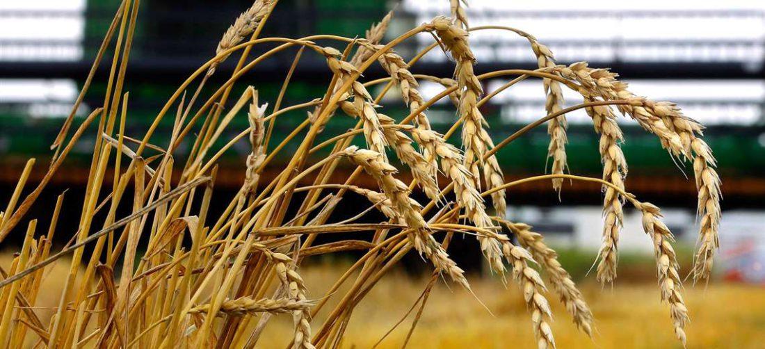 Para el IBCE se debe fortalecer la agroindustria para exportar su producción. Foto: RRSS