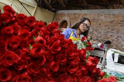 Cultivo de flores en una finca de Asocolflores. De acuerdo con la asociación, las rosas son el producto más vendido. 2018. Foto: Colprensa - Sofía Toscano.