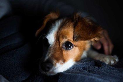 Los perros de noche ven mejor que los humanos (Foto: Shutterstock)