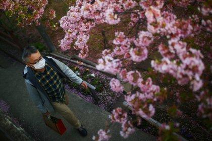 Los cerezos en Kioto (Reuters)