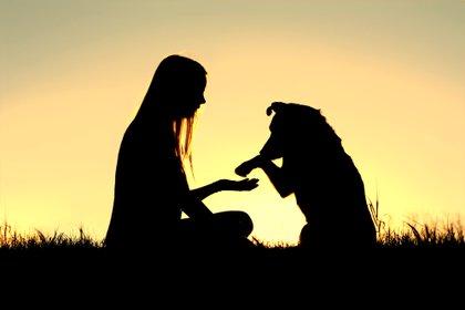 Después de una sesión de estimulación sensorial, basada en mimos y caricias, tanto humanos como perros producimos una cantidad parecida de oxitocina (Shutterstock)