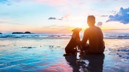Los perros tienen una buena capacidad de memoria y, sobre todo, de memoria afectiva (Shutterstock)