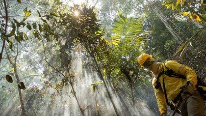 La deforestación de la selva amazónica responde por el 40 % de las emisiones de gases de Brasil y subraya la preocupación que existe en el mundo por el aumento de la tala de árboles y los incendios en esa región (EFE)