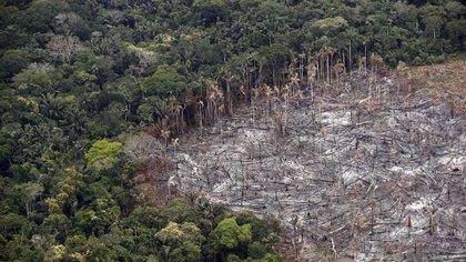 Fotografía de un terreno de selva deforestado, el 22 de febrero de 2020 (EFE)