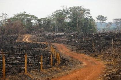 La deforestación y la mayor interacción entre los seres humanos con los animales son algunos de los factores que contribuyen a aumentar el riesgo de que se desarrollen brotes epidémicos y pandemias/ REUTERS/Luisa González