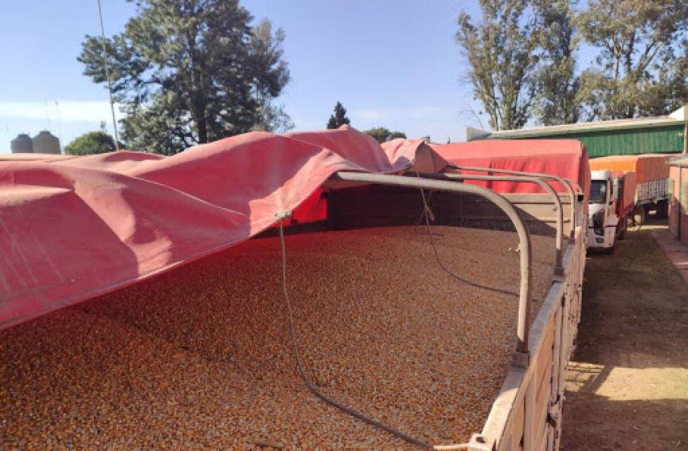 Contrabando de granos, el rival de los productores del Chaco