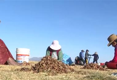 Los pobladores trabajan durante la época de invierno (Foto: Unitel)