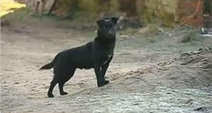 El can fue calificado por los vecinos de la zona como un héroe