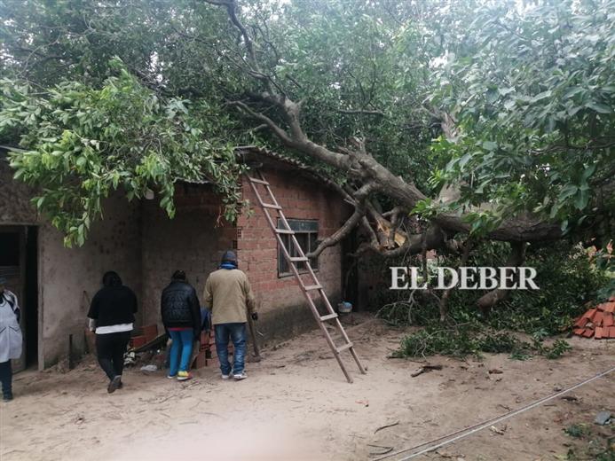 El viento tumbó un árbol sobre una casa en barrio El Retoño. Foto. Juan Carlos Torrejón