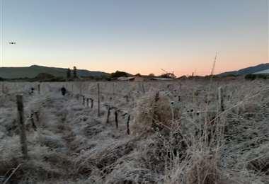 Las heladas registradas afectaron cultivos en los valles / Foto: Rodolfo Orellana