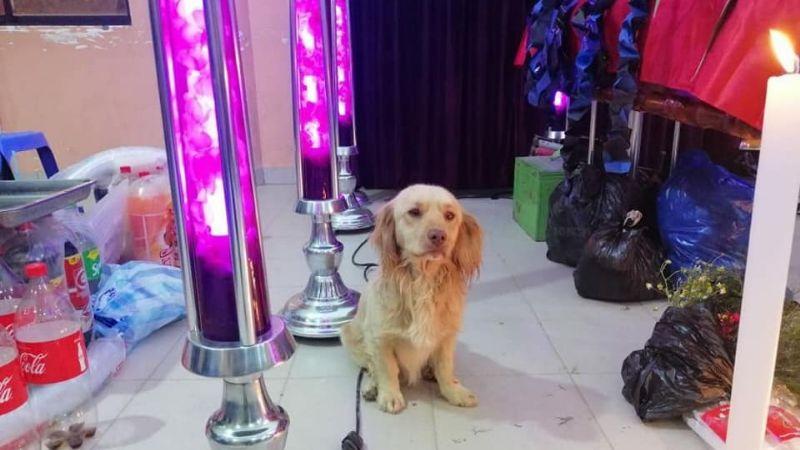 Conoce a «Cualsito», el perro que acompañó a su amo tras el accidente en Villa Charcas