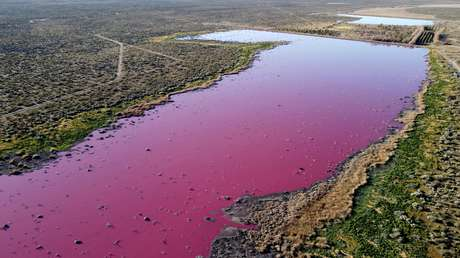 FOTOS: Una laguna se tiñe de rosa en Argentina debido a la contaminación por el vertido de residuos de empresas pesqueras