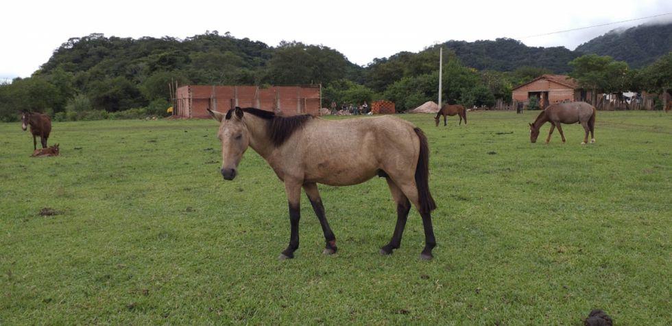 YPFB libera Tariquía y borra San Telmo del plan exploratorio