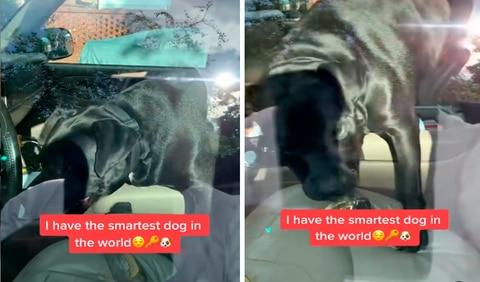 La tierna mascota no vaciló ni un momento en ayudarlo y se acercó al asiento del conductor. Foto: captura de Facebook
