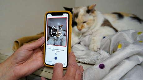 Desarrollan una aplicación que puede 'ver' el dolor que experimentan los gatos
