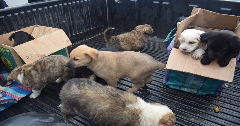 Rescatan perros y gatos que pretendían comercializadas en la feria 16 de Julio – El Alto es Noticia