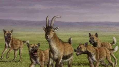 """Descubren por primera vez los restos de una especie de cánido """"hipercarnivoro"""" de hace 1,8 millones de años junto a un asentamiento de 'Homo erectus'"""