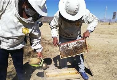 Los apicultores no se dan por vencidos a pesar del contrabando y productos adulterados