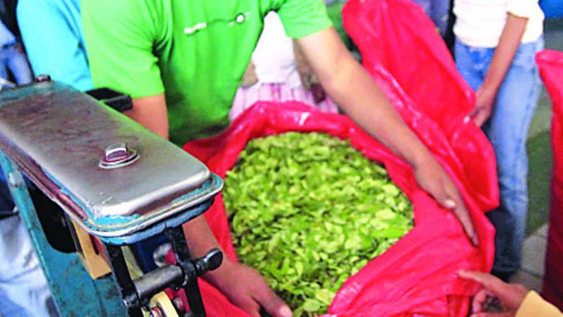 Sólo el 35% de la producción de coca pasó por mercados legales