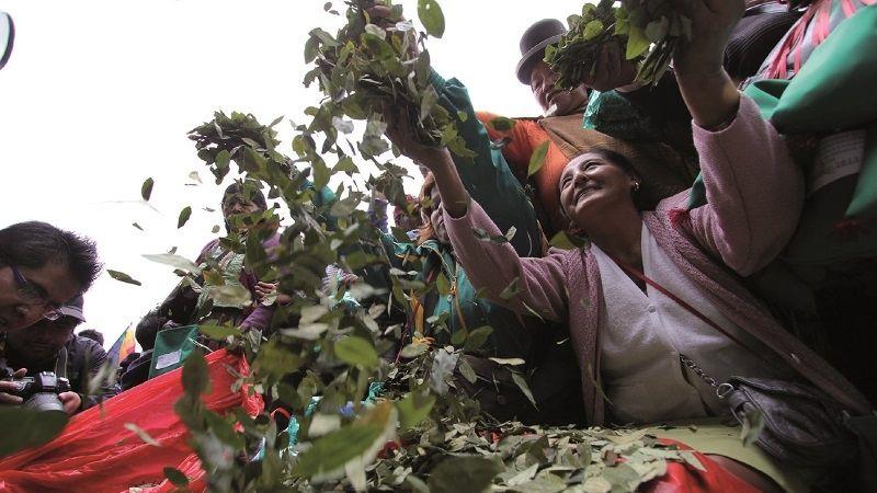Cultivo de coca en áreas protegidas se elevó de 315 a 454 hectáreas en 2020