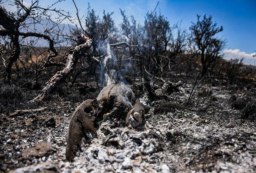 Restos de un árbol nativo tras el incendio en Sacaba, hoy. Dico Solís.