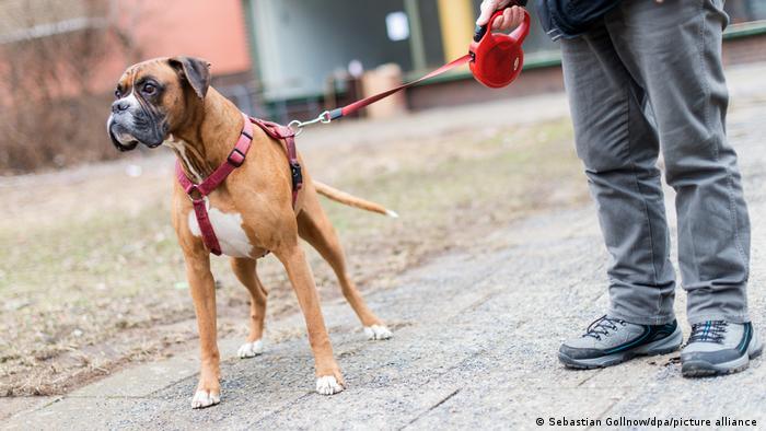 En Alemania se paga anualmente un impuesto sobre la tenencia de los perros.