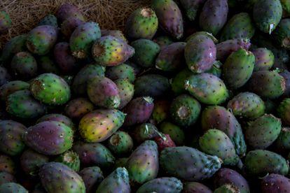 En el 90% de las 15 hectáreas de tierras de Llaca Llaca se cultivan las tunas o higos chumbos.