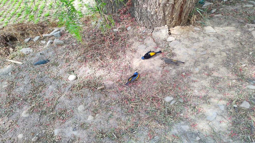 Algunas aves muertas cerca a la plantación de lechuga detrás del Cristo de la Concordia. Foto: Tunari sin Fuego.
