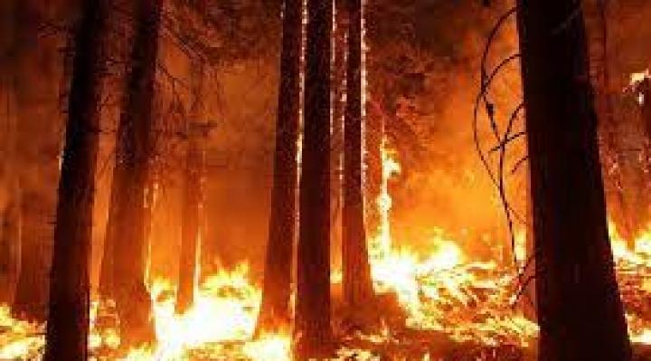 ABT autoriza nuevas quemas en la Amazonía de La Paz, Beni y Pando