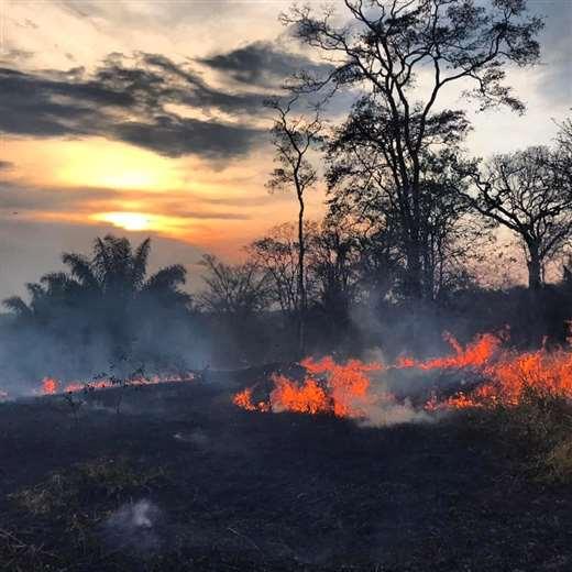 Cuatro nuevos incendios forestales en Santa Cruz.