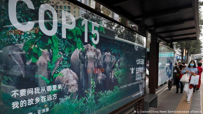 Afiche de la COP15 en Kumming, China.